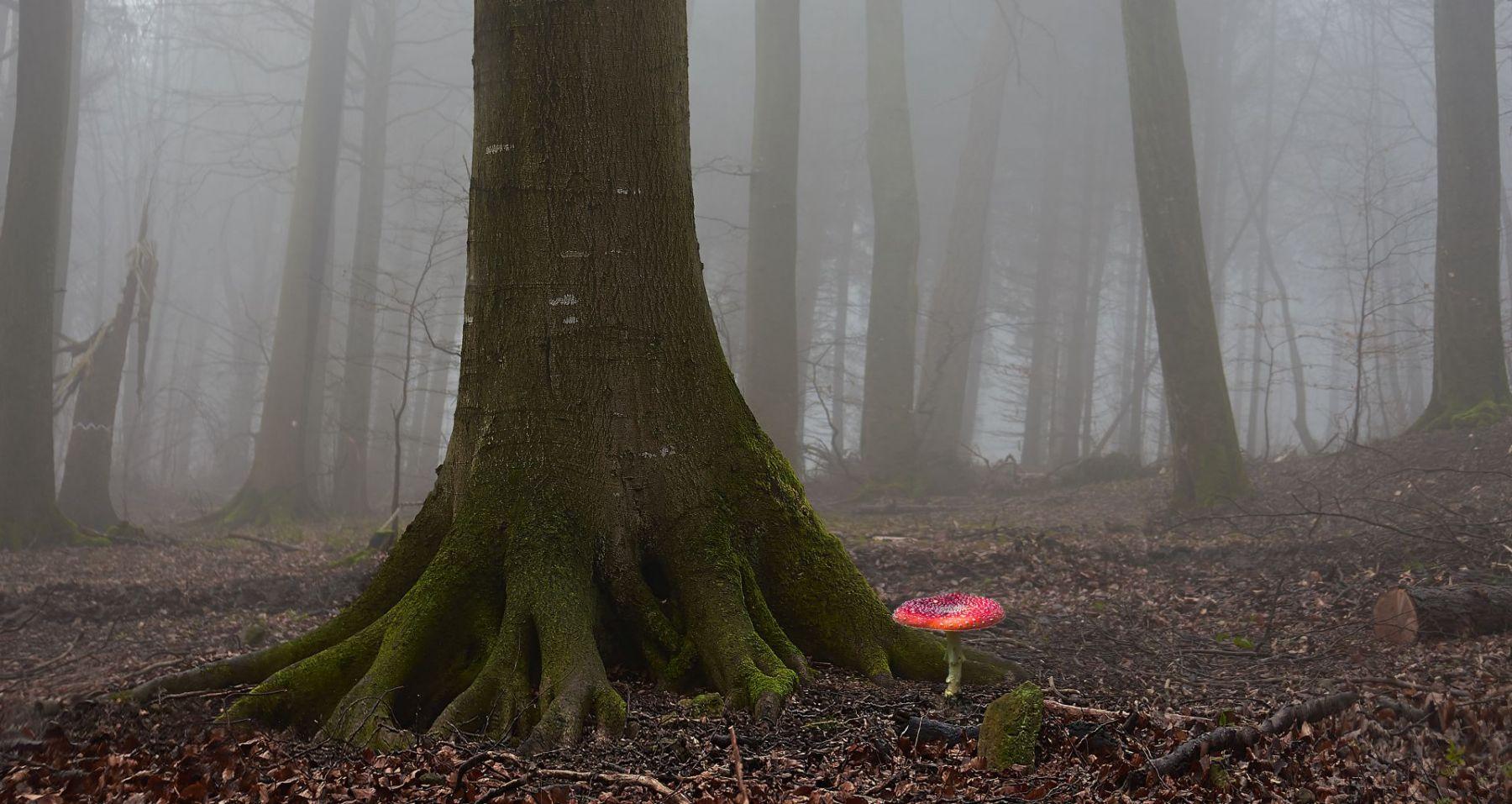Weiberner Wald